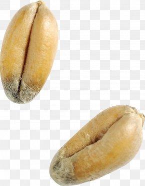 Wheat - Wheat Caryopsis Grain PNG
