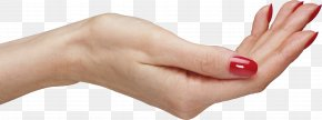 Palm Hands , Hand Image Free - Hand Arecaceae Icon PNG