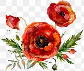 Vector Watercolor Flower Leaf Decoration - Flower Poppy Watercolor Painting PNG
