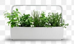 Vascular Plant Houseplant - Vegetables Cartoon PNG