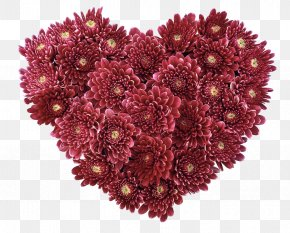 Red Chrysanthemum - Flower Heart Love Valentines Day Wallpaper PNG