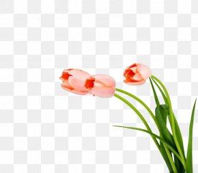 Tulips - Hi Friend! Desktop Environment Multimeter Wallpaper PNG