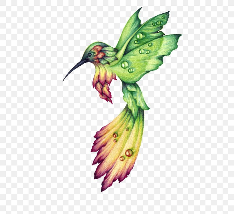 Hummingbird Drawing Birds Watercolor Painting, PNG, 484x750px, Hummingbird, Animal, Beak, Bird, Color Download Free