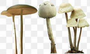 Mushroom - Magic Mushrooms Psilocybe Mexicana Psilocybin Mushroom PNG