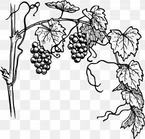 Grape Vine - Common Grape Vine Drawing Clip Art PNG