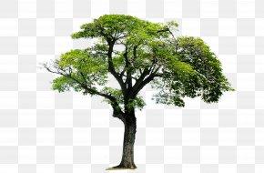 Trees,Trees,Landscape Tree - Tree Acrylonitrile Butadiene Styrene Monomer 1,3-Butadiene PNG