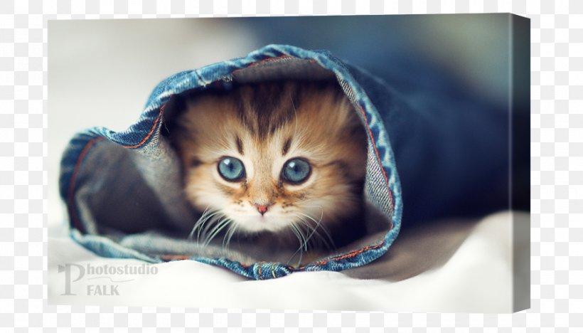 Cat Kitten Desktop Wallpaper Dog Pet Png 900x514px Cat Android Carnivoran Cat Like Mammal Cuteness Download