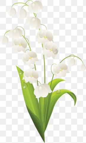 Bell Orchid - Lily Of The Valley Flower Royalty-free Stock Photography Clip Art PNG