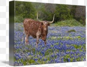 Longhorn - Austin Cedar Hill Ennis Texas Hill Country Texas Longhorn PNG