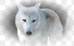 Arctic Fox - Siberian Husky Arctic Wolf African Wild Dog Alaskan Tundra Wolf PNG