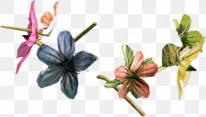 Flowers Day Clip Art Dead - Pressed Flower Craft Clip Art Desktop Wallpaper PNG