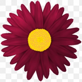Flower Clip Art Red - Clip Art Flower Transvaal Daisy Desktop Wallpaper PNG