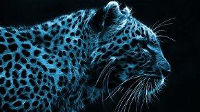 Cheetah - Desktop Wallpaper High-definition Video High-definition Television 1080p Display Resolution PNG