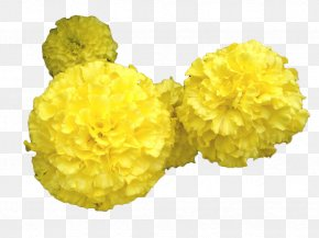 Yellow Marigold Flower - Mansu Hill Grand Monument Mexican Marigold Toran Flower PNG
