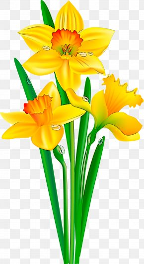 Flowerpot Narcissus - Flower Cut Flowers Yellow Petal Plant PNG