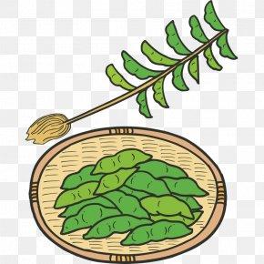 Vegetables,Fruits And Vegetables,Green,fruit,vegetables - Edamame Vegetable Clip Art PNG