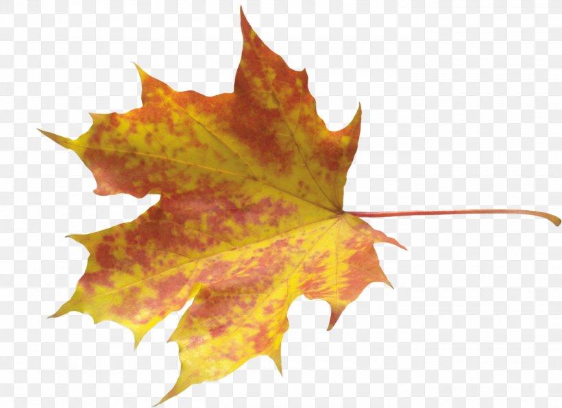Autumn Leaf Color, PNG, 2800x2037px, Autumn Leaf Color, Autumn, Flowering Plant, Leaf, Maple Leaf Download Free