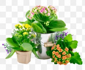 Pot Pot Plants - Grow Light Incandescent Light Bulb Light-emitting Diode Lighting PNG
