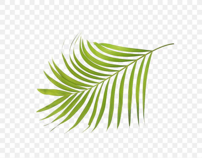 Leaf Plant Stem Grasses Green Line, PNG, 1842x1440px, Leaf, Biology, Grasses, Green, Line Download Free