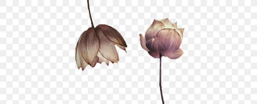 Nelumbo Nucifera Ink Wash Painting, PNG, 1024x415px, Nelumbo Nucifera, Chinese Painting, Chinoiserie, Flower, Ink Download Free