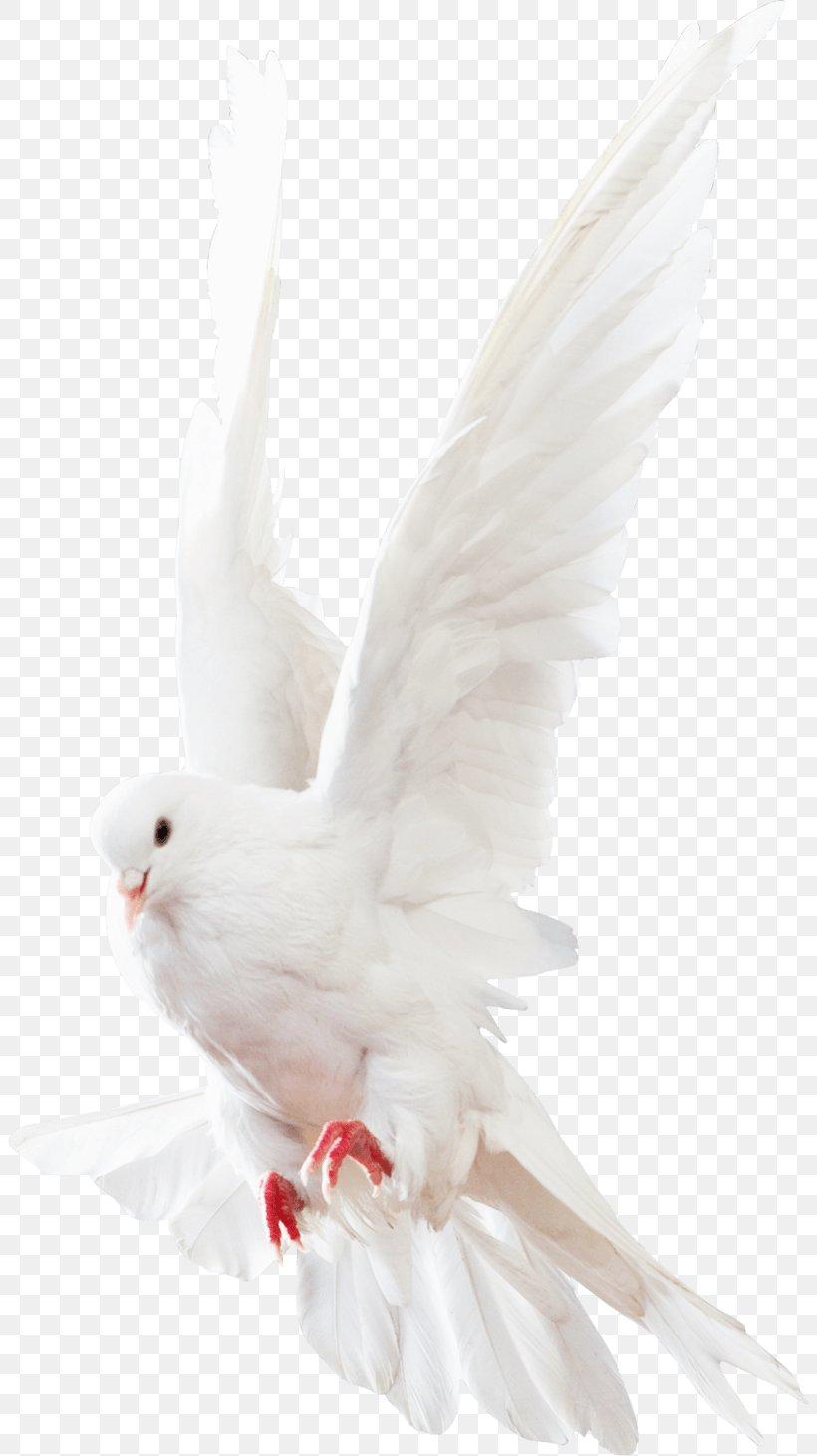 Columbidae Rock Dove Homing Pigeon, PNG, 20x20px, Rock Dove ...