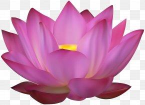 Pink Lotus Clip Art Image - Sacred Lotus Clip Art PNG