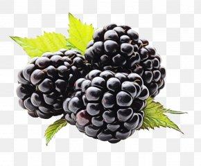 Seedless Fruit Food - Berry Blackberry Grape Fruit Rubus PNG
