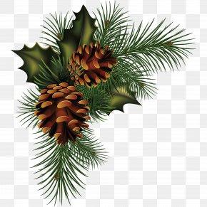Pine Cone Material - Conifer Cone Pine Fir Spruce PNG