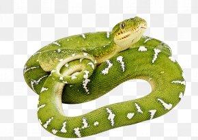 Green Snake Image - Snake Clip Art PNG
