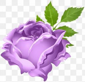 Purple Rose Clip Art Image - Garden Roses Purple Centifolia Roses Clip Art PNG