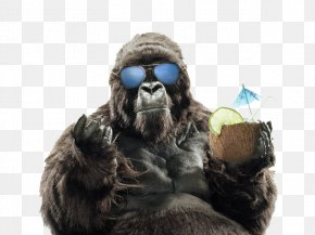 Summer Vacation FIG Gorilla - Western Gorilla Primate Orangutan Sunglasses PNG