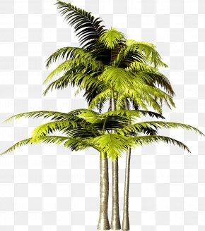 Palm Tree - Tree Arecaceae Plant PNG