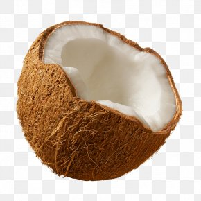 Coconut Image - Coconut Milk Coconut Water Coconut Oil PNG