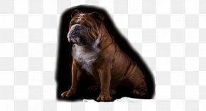 Dog - Dog Breed Non-sporting Group Breed Group (dog) Snout PNG