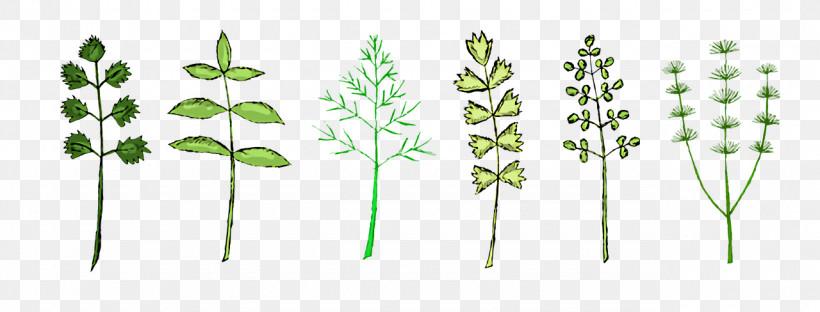 Leaf Plant Stem Grasses Flora Tree, PNG, 1280x488px, Leaf, Biology, Flora, Geometry, Grasses Download Free