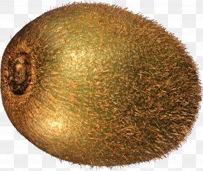 Kiwi Image Fruit Kiwi Pictures Download - Kiwifruit PNG