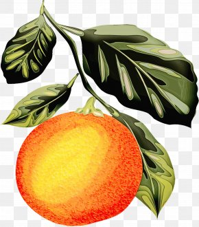Flowering Plant Peach - Leaf Plant Fruit Tree Flower PNG