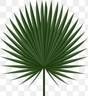 Palm Leaves - Palm-leaf Manuscript Arecaceae Palm Branch Clip Art PNG