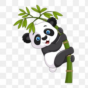 Panda - Giant Panda Cartoon Royalty-free Illustration PNG