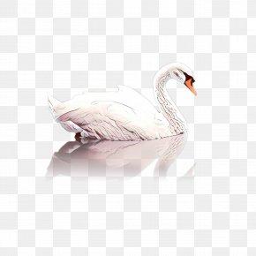 Snow Goose Wildlife - Snow Cartoon PNG