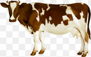 Cow - Simmental Cattle Milk Dairy Cattle Calf PNG