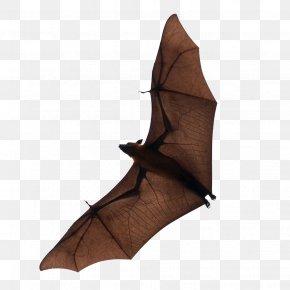 Bat - Bat Flight Download PNG