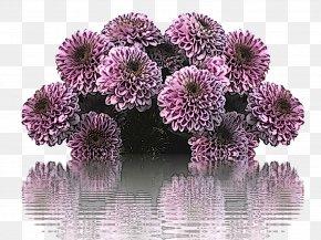 Petal Flowering Plant - Flower Purple Plant Violet Flowering Plant PNG