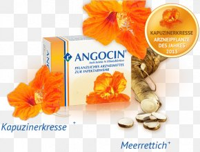 Sliced aloe Vera - Infectious Disease Pharmaceutical Drug Garden Nasturtium Infection Mustard Oil PNG