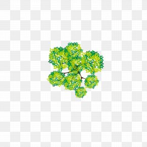 Camphor Tree Lush Tree Top - Tree Euclidean Vector Adobe Illustrator PNG