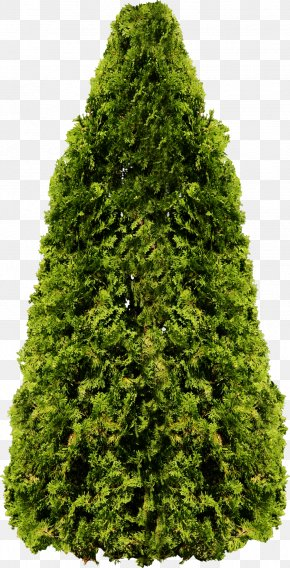 Tree Image, Free Download, Picture - Tree Populus Nigra Fir PNG