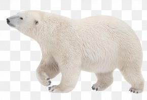 Polar White Bear - Polar Bear 761-8043 Handstand PNG
