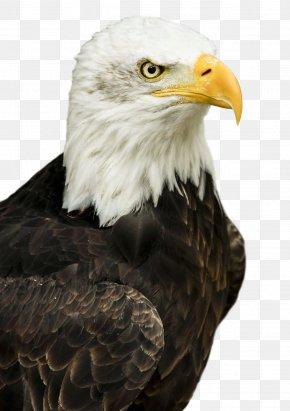 Eagle - Master Moto Taxi Hawk PNG