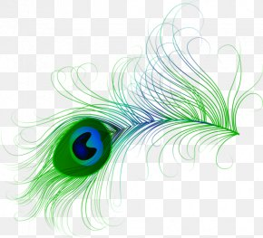 Hand-painted Peacock Feathers - Feather Peafowl Bird Clip Art PNG