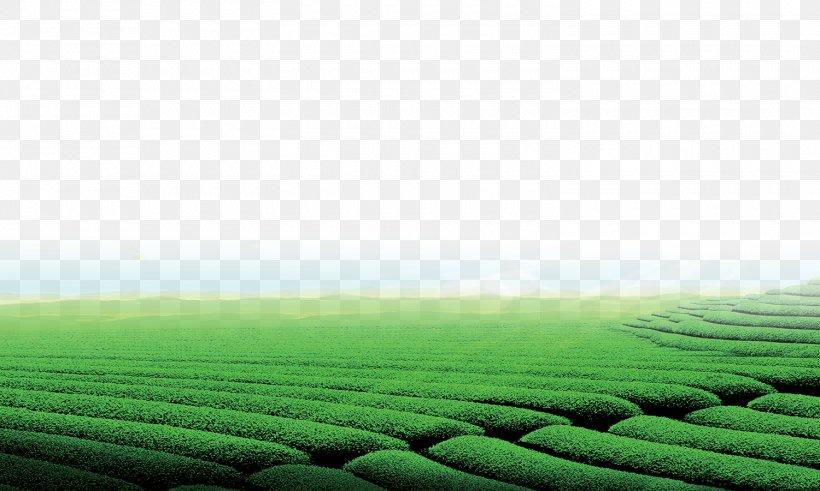 Green Tea Tea Garden Download Png 1500x900px Tea Agriculture Crop Field Grass Download Free